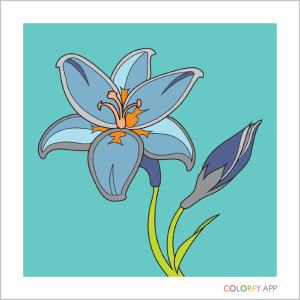 The simplest image in the Colorfy coloring in app